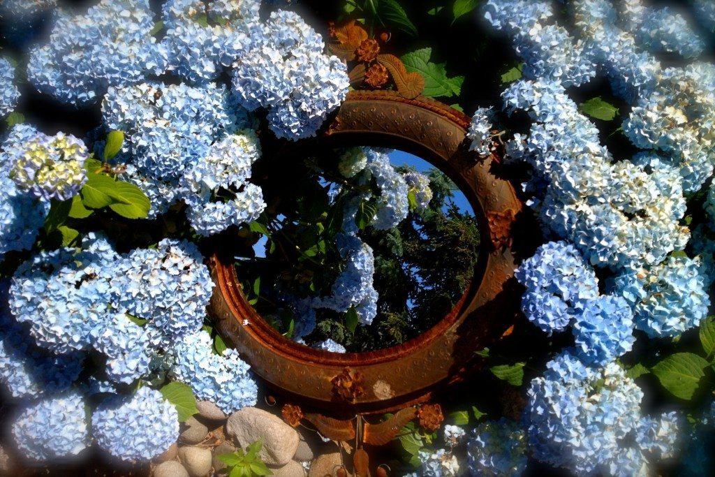 Hydrangeas-With-Antique-Mirror