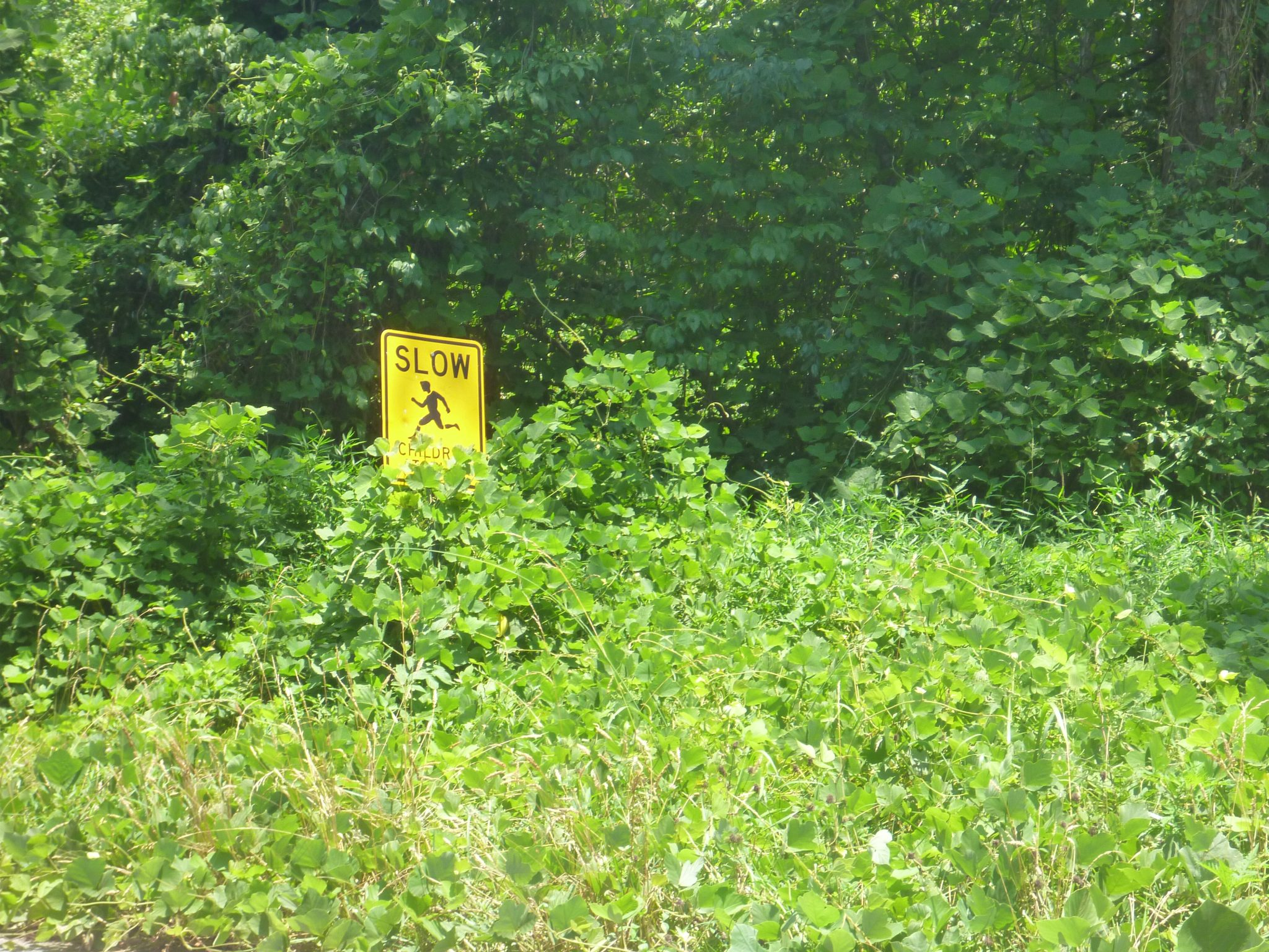 Kudzu-covering-sign