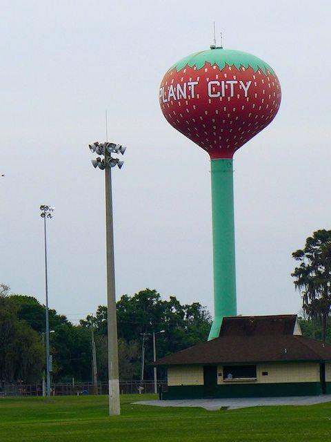 Plant City Florida Strawberry