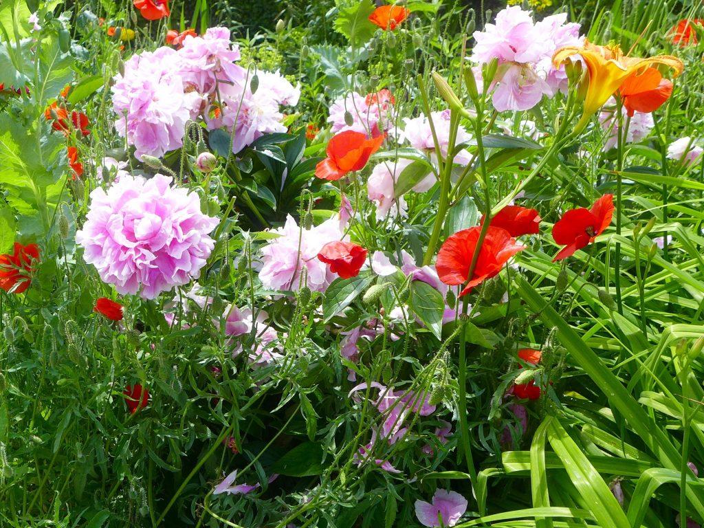 monet-garden