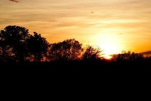 African-sunset