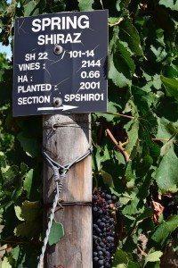 grapes-vines-shiraz