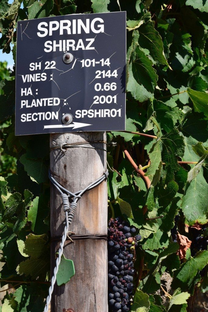 Marker on row of grapes at Waterford Estate in Stellenbosch, home of South Africa wine tour