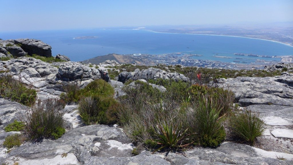 Capetown-Table-Mountain-flora