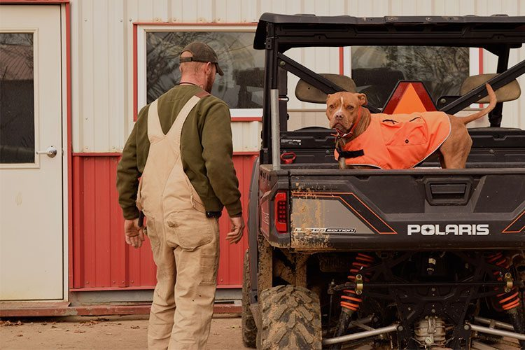 pit bull in Polaris utility vehicle