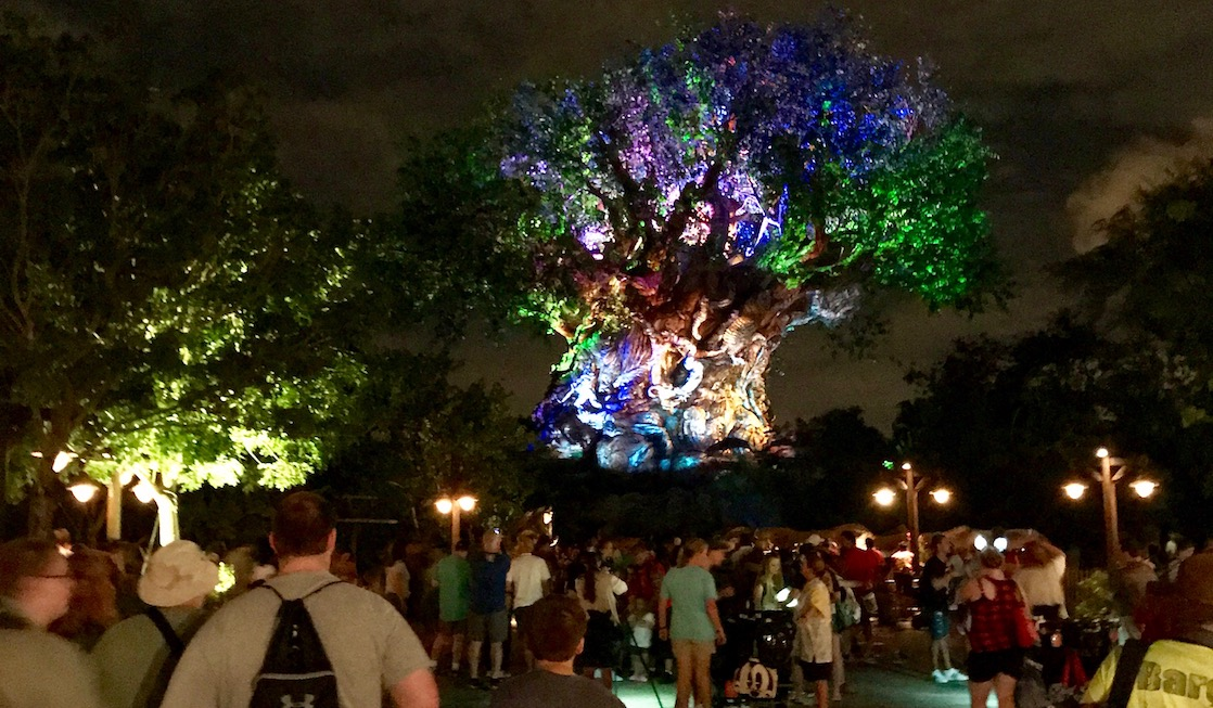 When visiting Pandora without a FastPass, be sure to catch the Tree of Life Awakening in Disney's Animal Kingdom.