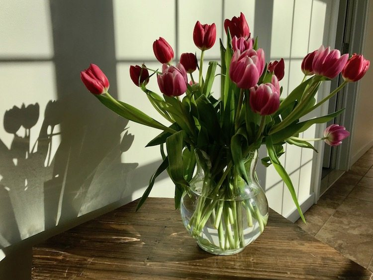 tulips in clear vase - keeping cut flowers in water that's not cloudy